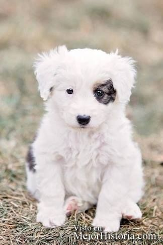 30 Perritos y gatos mas adorables y tiernos | Mejor Historia