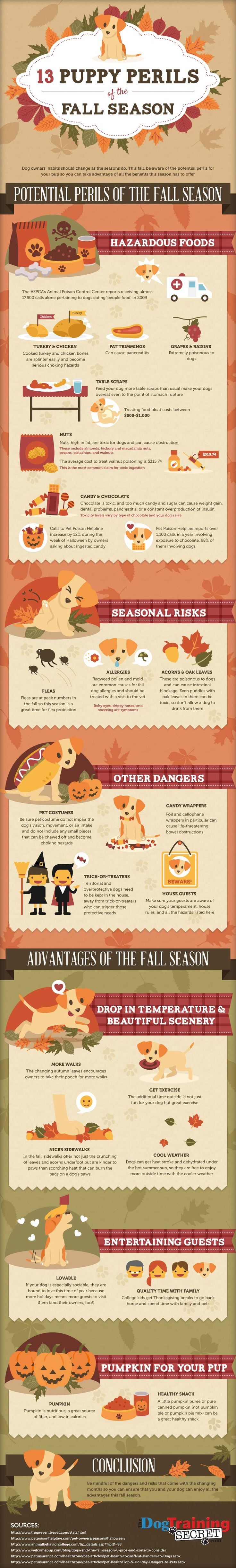 Puppy Care Tips in Fall : Fall season hides dangers and pitfalls for your little but also benefits that your puppy can enjoy. Though fall has passed for good, you will find several tips that go for winter too.  > http://infographicsmania.com/puppy-care-tips-in-fall/?utm_source=Pinterest&utm_medium=ZAKKAS&utm_campaign=SNAP