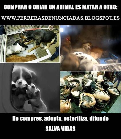 Contra el maltrato y abandono al podenco, contra la venta y cria de cachorros de perros podencos en Cadiz