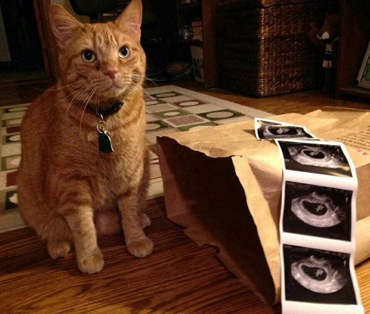 Die Katze ist aus der Tasche Schwangerschaftsmitteilung. – Schwangerschaft verk …