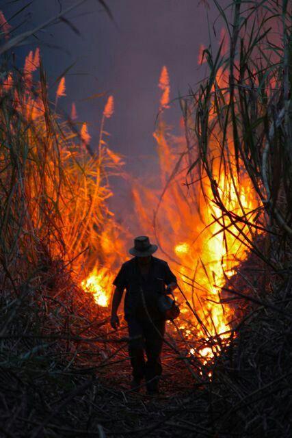 Controlled cane fire - Giru, NQ Australia