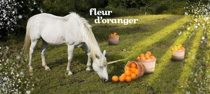 Fleur d'oranger by DavidsTea