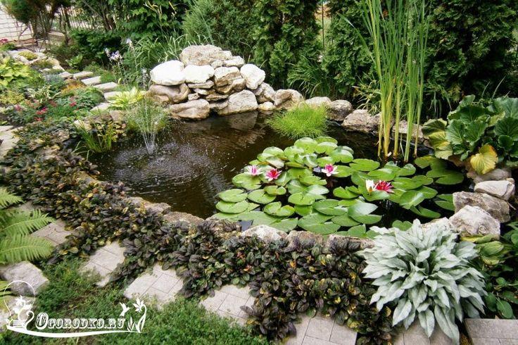 Как сделать дачный пруд своими руками недорого и быстро? Из каких материалов сделать пруд, какие размеры выбрать, что делать чтобы вода в пруду не цвела?