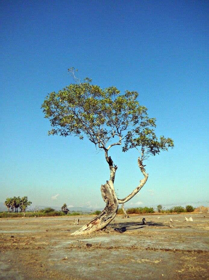 Pohon kehidupan,,