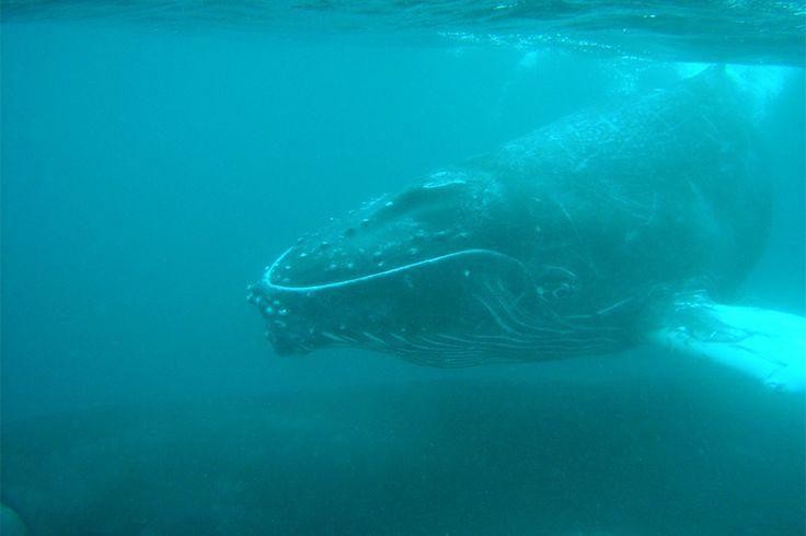 8 Best Costa Rica Scuba Diving & Snorkeling Spots