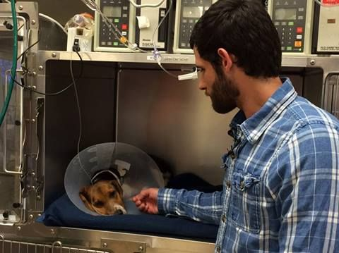 Hiring Our Heroes shares.....  Someone get these two a treat!  This Army vet's medical training kicked in when he ran across traffic to save the life of this injured beagle.   Hat tip to The Dish - Andrew Sullivan for the story: http://fox4kc.com/2014/06/13/army-veteran-risks-live-to-save-injured-beagle/