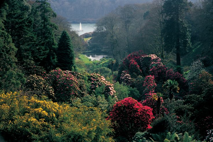 Rhododendron Valley in spring, Trebah Garden, Cornwall