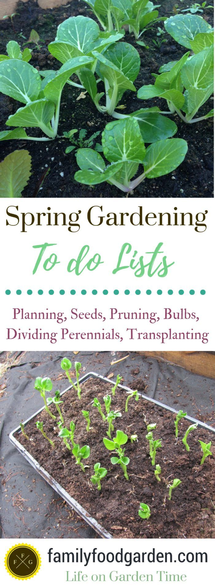 Spring gardening to do lists