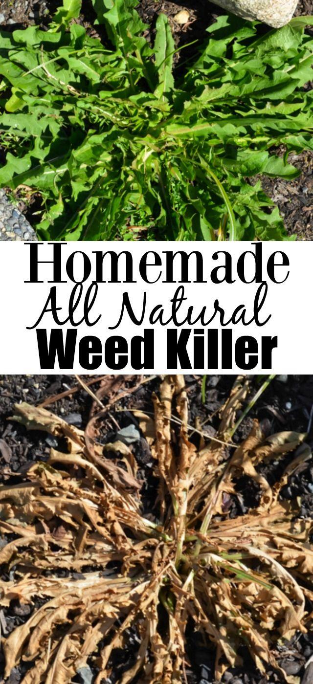 Vinegar, Orange Oil, Soap - Homemade all natural inexpensive weed killer made using vinegar, dish soap and salt.
