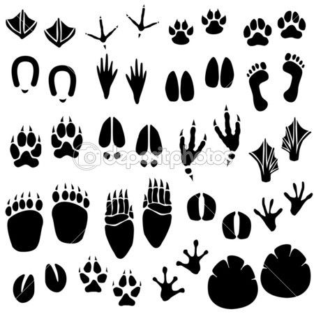 A set of animal footprint in vector.