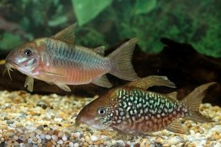 Medication of Scaleless Fish + Invertebrates - Tropical ...