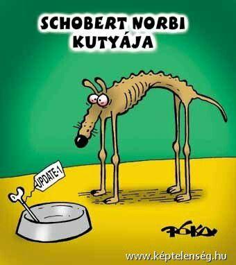 Schorbert Norbi kutyája