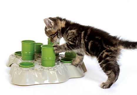 Does your cat need a little boost mentally and physically? Try the Aikiou Stimulo interactive feeder as a way to get them problem solving, hunting and eating less! http://moderncat.com/favefind/aikiou-stimulo-cat-interactive-feeder