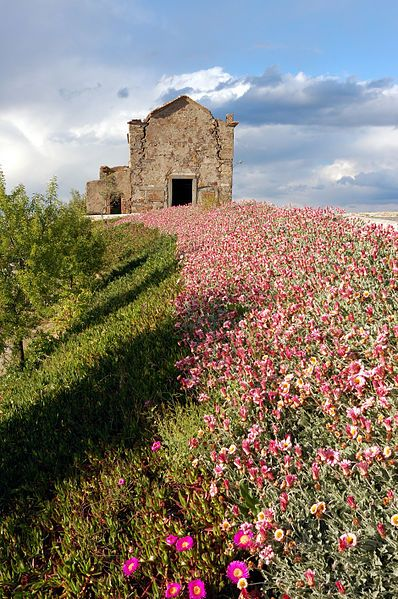 Flower path...in Monsaraz, Portugal.