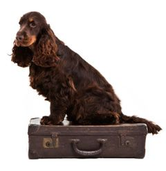 AeroPets Company is a Brisbane based pet transport company dedicated to animal lovers providing interstate and international pet relocation services. We can also provide the latest in pet travel comfort for optimal space and peace of mind when your pet is in the air.
