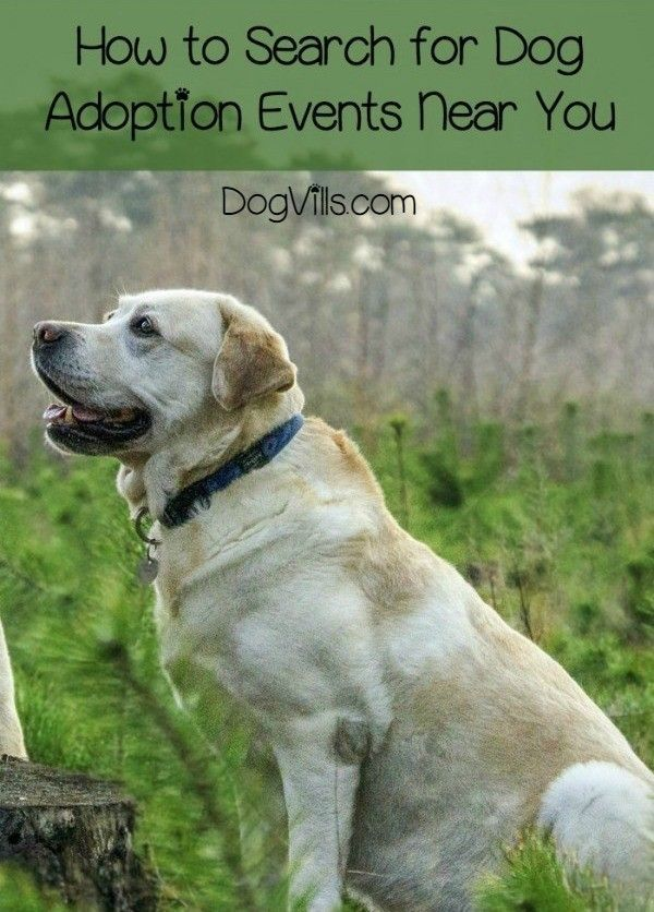 5 Tips To Find Dog Adoption Events Near You Dog Adoption Near Me Dogs The Perfect Dog