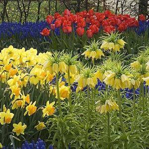 Les plus belles fleurs de printemps - Les plantes bulbeuses