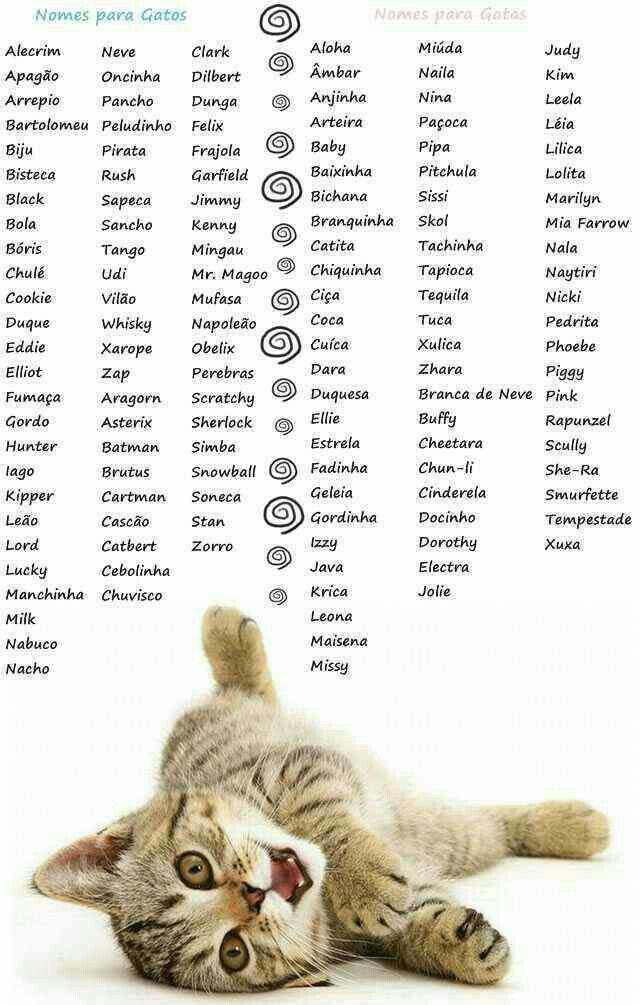 pet pets dog cat dogs cats petname petnames