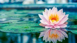 UVIOO.com - 3 Hour Chakra Healing Music: Zen Meditation Music,