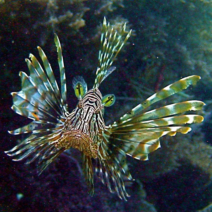Pemba's underwater world is extraordinary! The Manta Resort, #Mozambique #BucketList #Beach #Safari #Africa #Holiday #Travel #Ocean #Adventure #Fish #MarineLife #Island #Diving