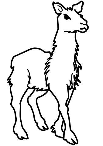 Kostenlose Malvorlage Lama Coloring and Malvorlagan