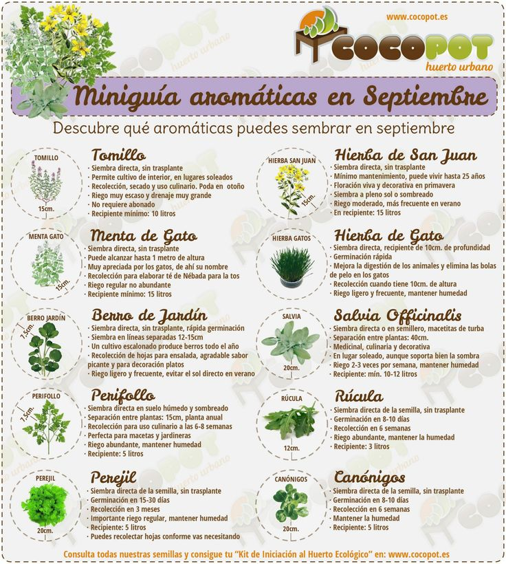 ¿Quieres saber qué aromáticas puedes sembrar en septiembre? Aquí las tienes ;)