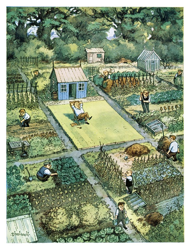 Allotment community - Norman Thelwell cartoon is one of PUNCH's best=loved illustrations. From the 1954 Summer Number.