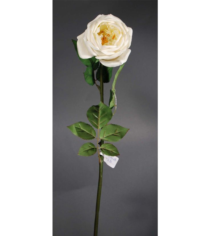 Real Touch Cabbage Roses on Sale at Afloral | Silk Roses | Hassle Free Shipping