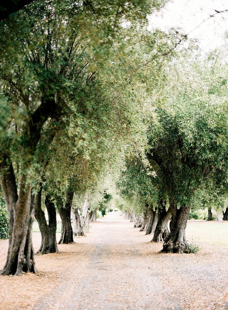 Livermore, California  JenHuangPhoto.com