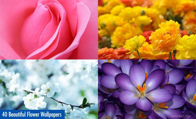 40 Beautiful Flower Wallpapers for your desktop. Read full article: http://webneel.com/40-beautiful-flower-wallpapers-your-desktop | more http://webneel.com/daily | Follow us www.pinterest.com/webneel