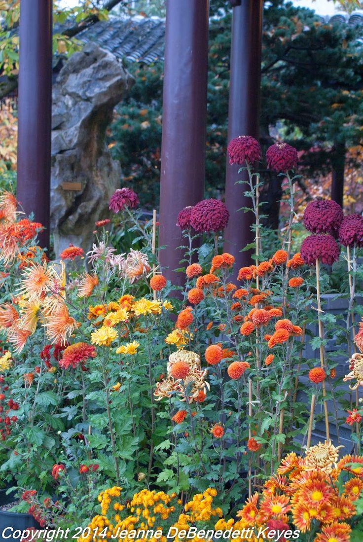 743 best small natural garden ideas images on pinterest | garden