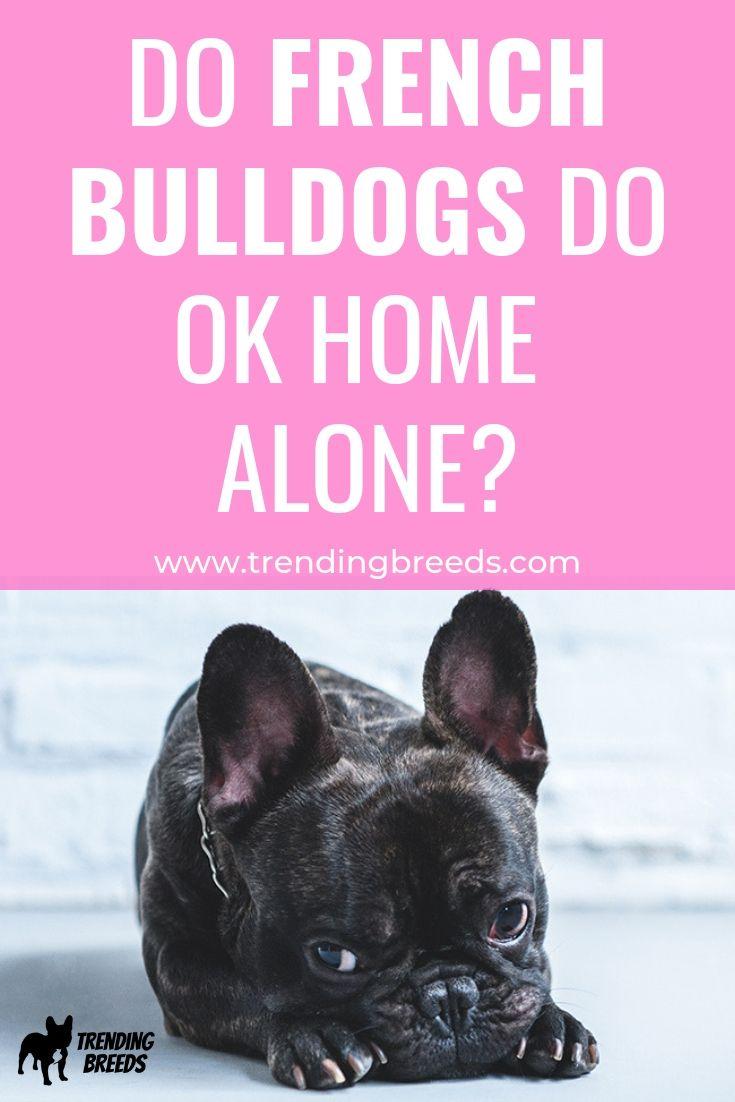 Do French Bulldogs Do Ok Home Alone French Bulldog Puppies