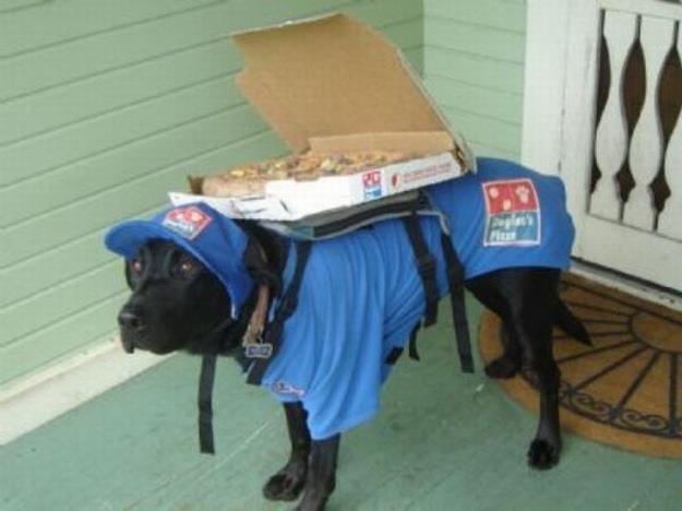 Zou Pizzabezorger zo'n hondenbaan zijn?