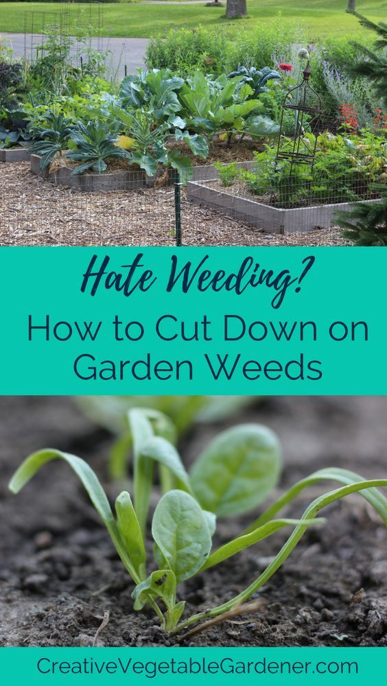 Weeding is a complete waste of time. Here's how to do less of it.