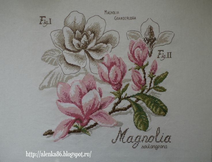 Магнолия/DFEA