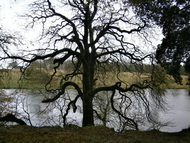 Holkam Hall ,Norfolk. I love beautiful tree shapes