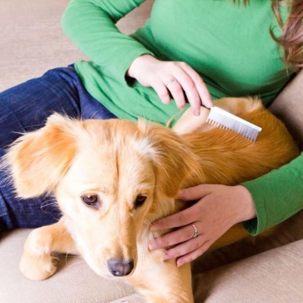 Causas de la alopecia canina, ¿por qué mi perro pierde pelo?