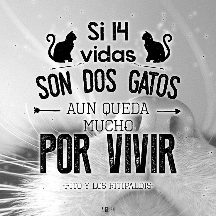 86 best Frases images on Pinterest | Lyrics to, Songs and Backgrounds