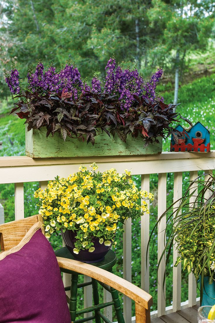 23 best window box recipes images on pinterest | garden, gardens