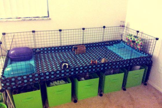 Guinea pigs australia grids c c cages australia grid for Diy guinea pig cage designs