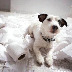 Trucs infaillibles pour dresser votre chien: Évitez les conflits Si votre chien se comporte mal dans certaines situations ou dans certains environnements, évitez-les le plus possible. Source: http://selection.readersdigest.ca/animaux/sante/10-trucs-infaillibles-pour-dresser-votre-chien?id=1