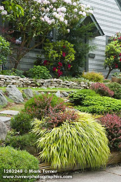 Japanese Barberry, Golden Japanese Forest Grass, Bird's Nest Spruce, Evergreen candytuft foliage in front yard garden w/ Rhododendrons around front door, low stone wall
