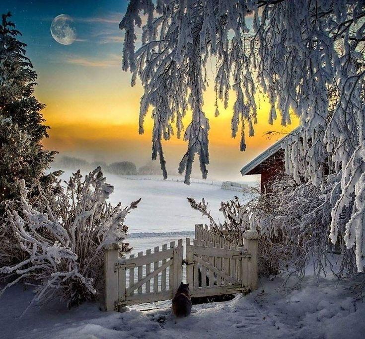 картинка ч добрым утром с зимними пейзажами была удивлена