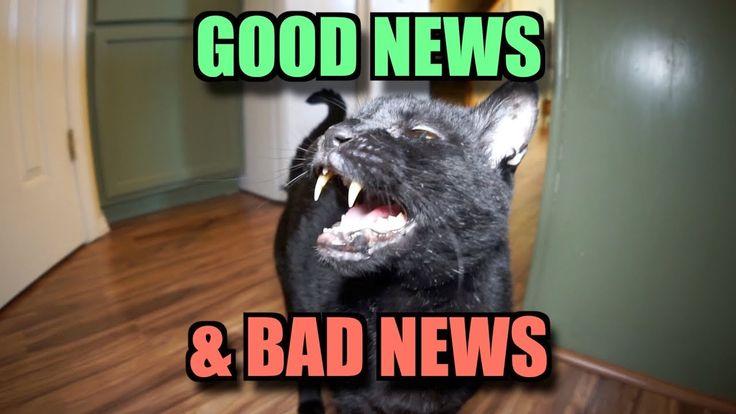 Talking Kitty Cat - Good News & Bad News - YouTube