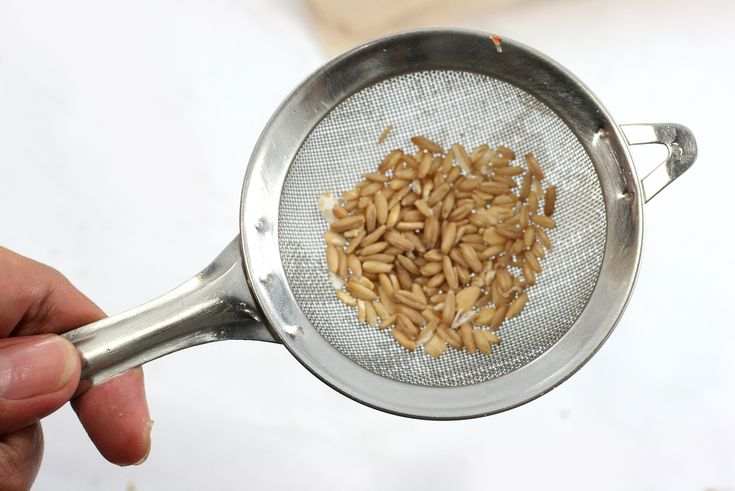 """Many breakfast cereals are made from """"puffed"""" grains, such as corn, rice and wheat. We can puff or """"pop"""" our popcorn kernels using a kettle with hot oil and a lid or using a more modern popcorn popper that works by circulating hot air..."""