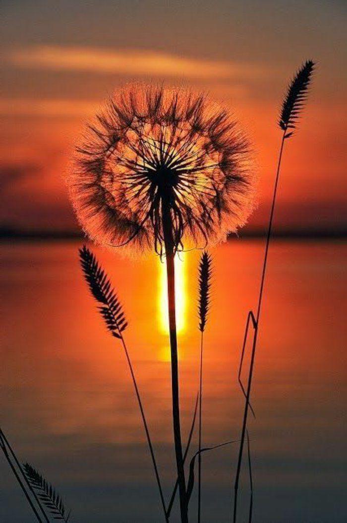 une jolie paysage de la coucher de soleil a telecharger en hd gratuitement