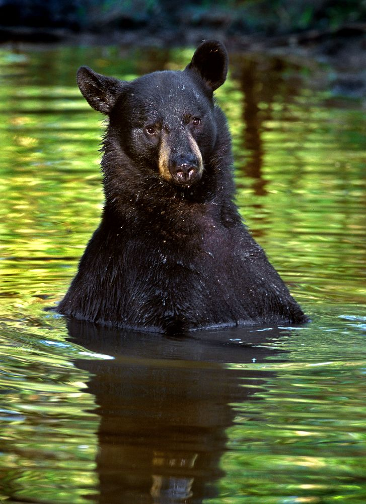 83 Best Smoky Mountain Wildlife Images On Pinterest