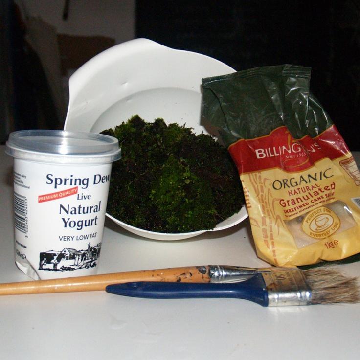 A recipe for moss paint (moss graffiti)