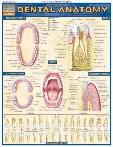 Dental Anatomy (Quickstudy: Academic)/Inc. BarCharts