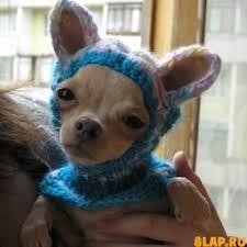 Картинки по запросу вяжем котам  и собакам одежду